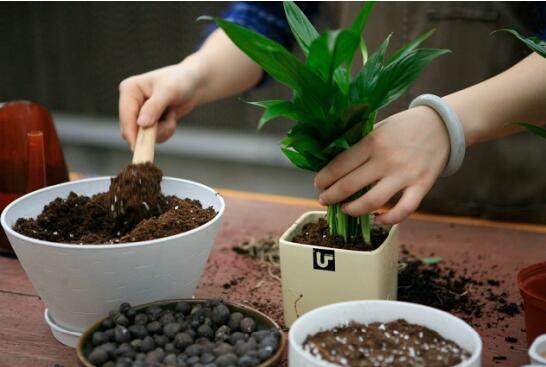 花卉栽培中保水剂的应用